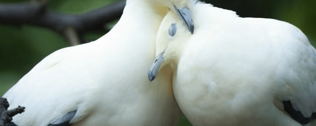 Виды любови
